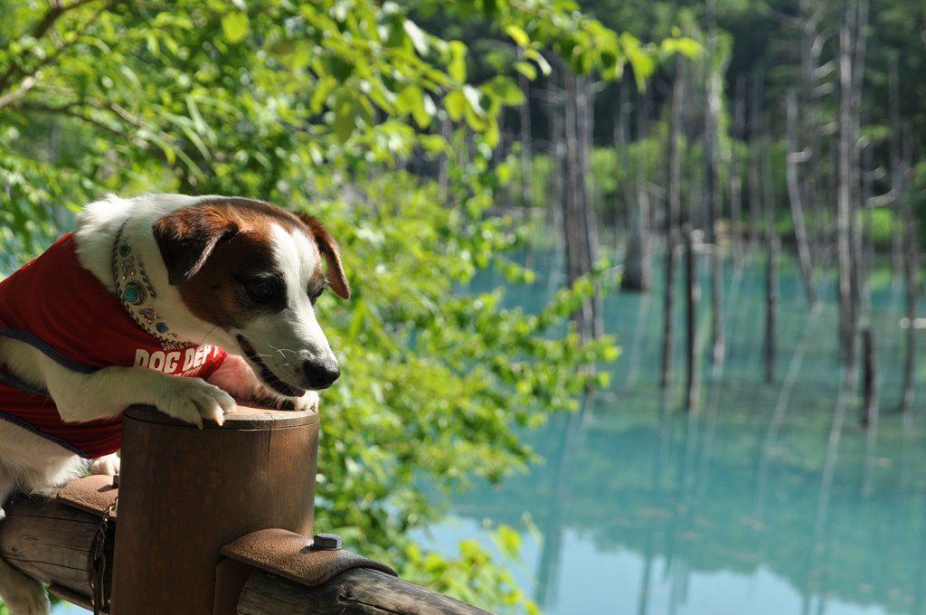 青い池とソラ