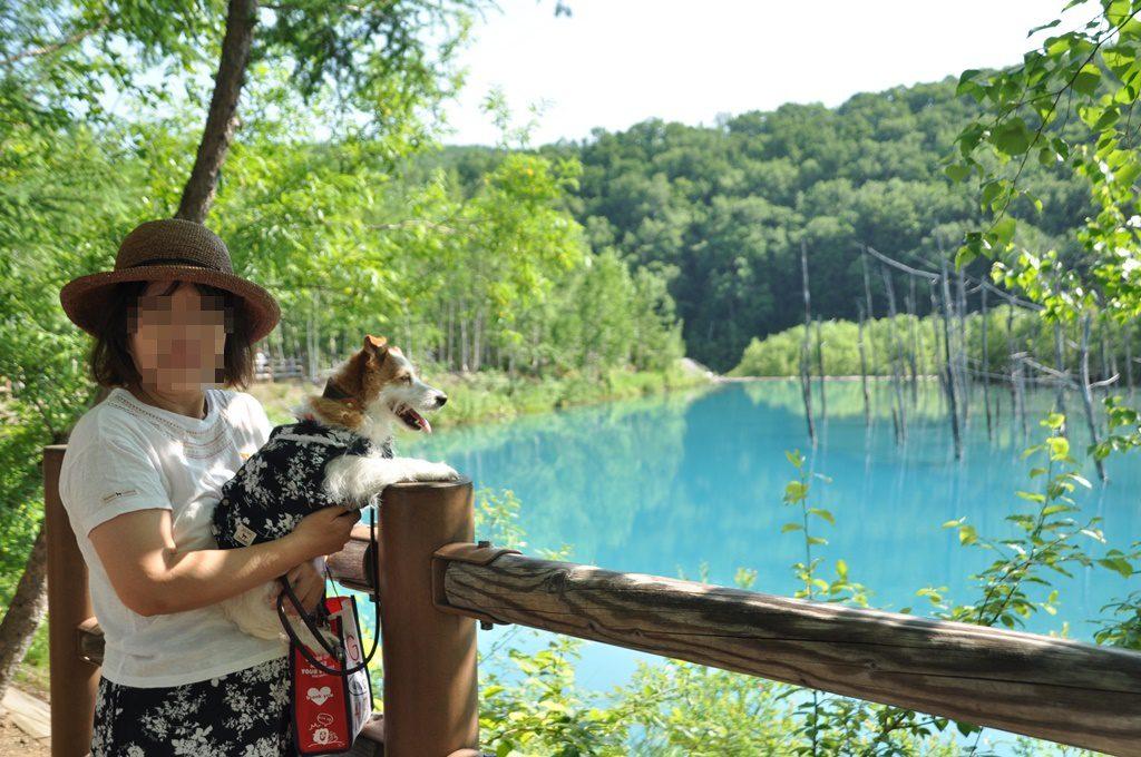 青い池とフィオナ、フィオナママ