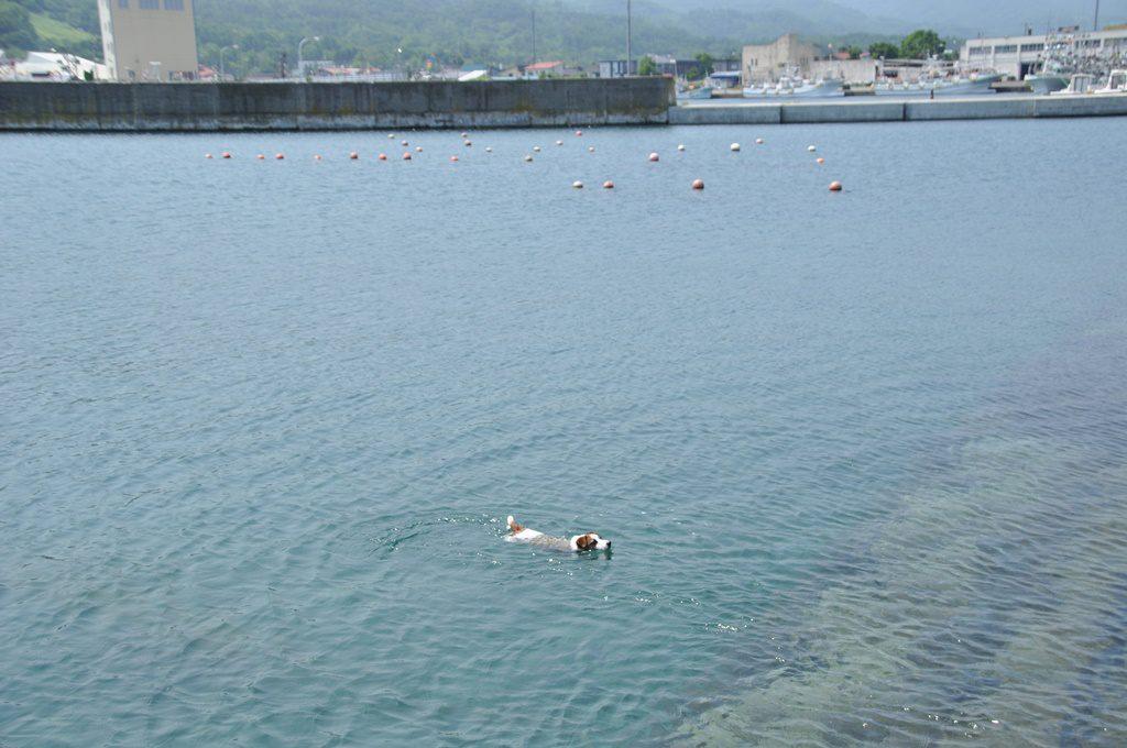 積丹で泳ぐソラ