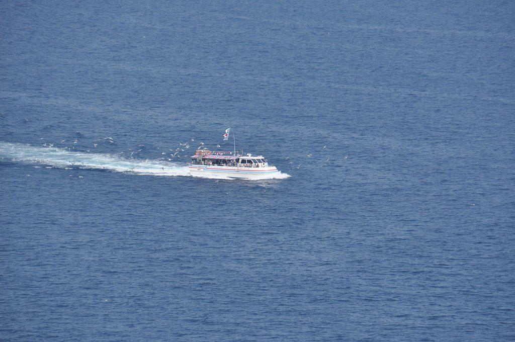 観光船に群がるカモメです。