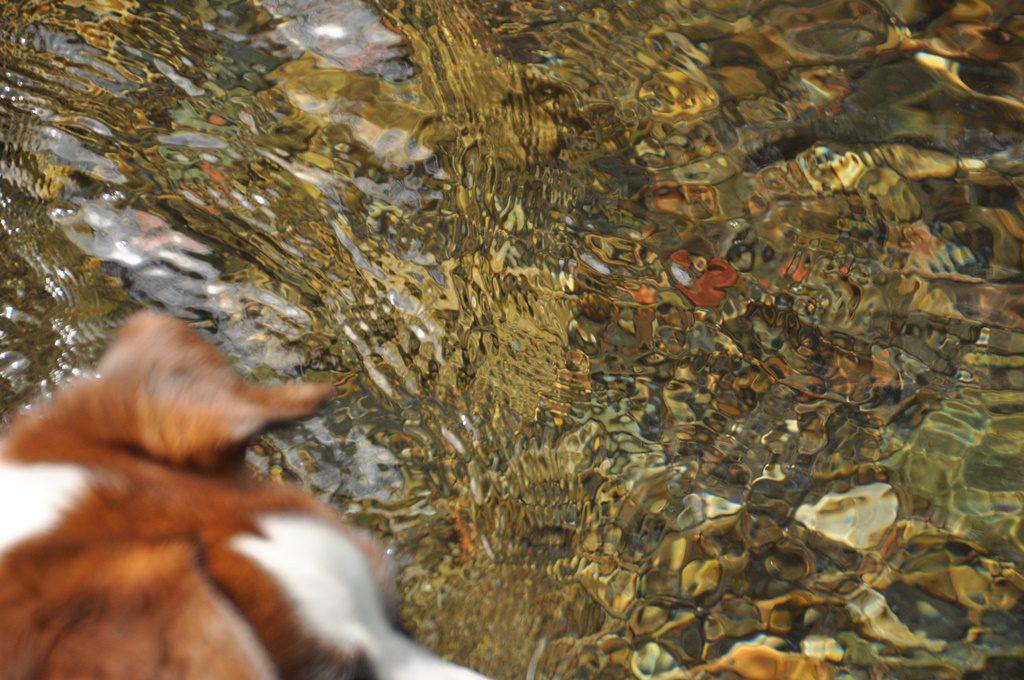 透き通る綺麗な水
