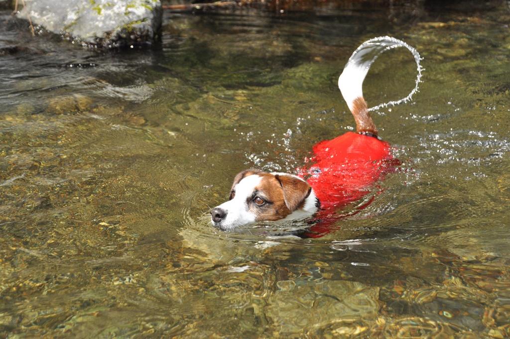 川で泳ぐソラ