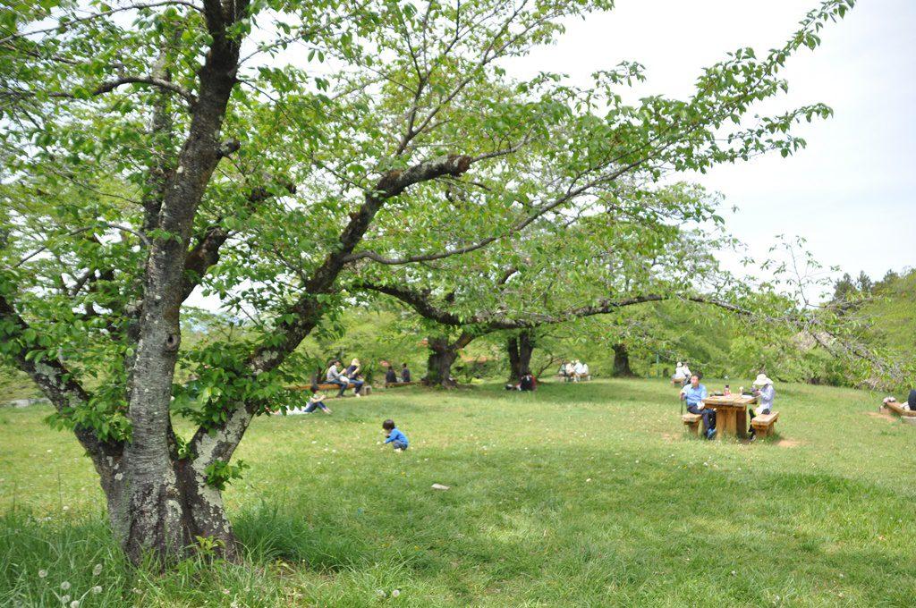綺麗な公園もあります