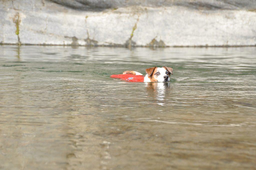 水はとても綺麗