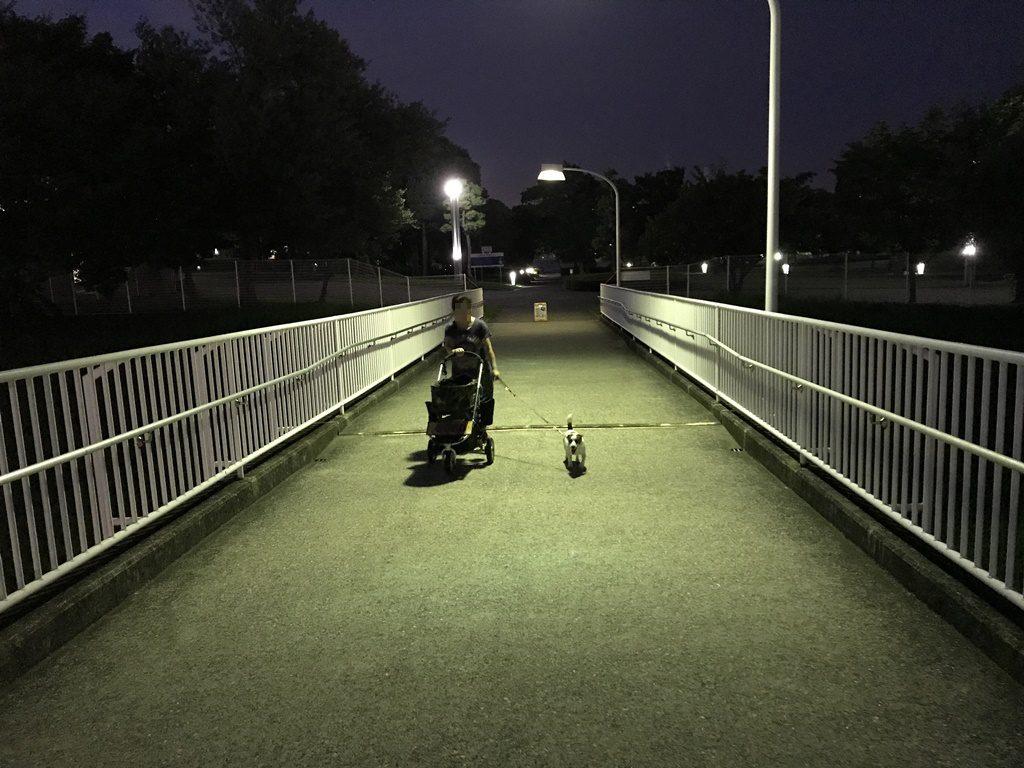 夜散歩です