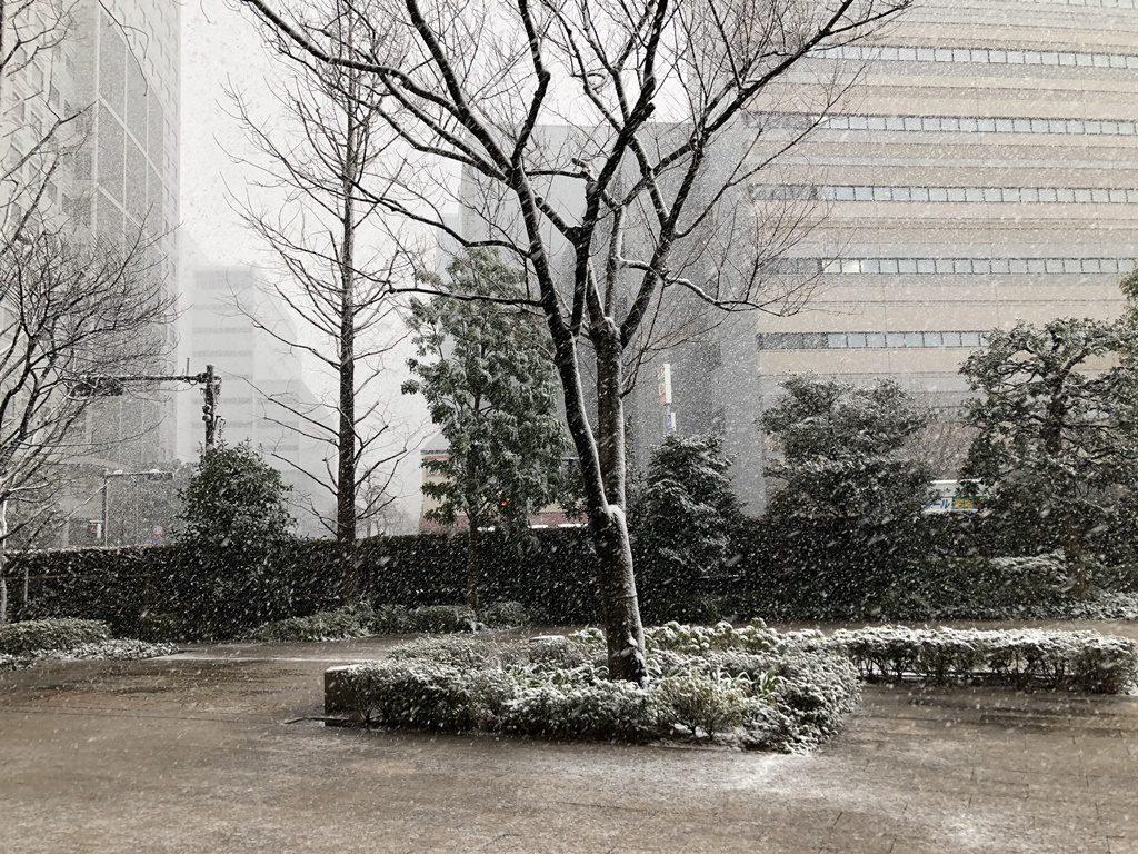横浜でも雪