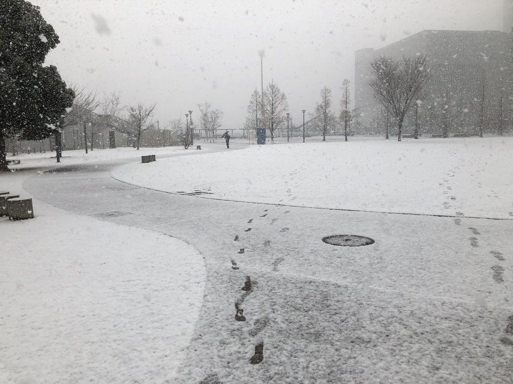 近くの公園も雪化粧