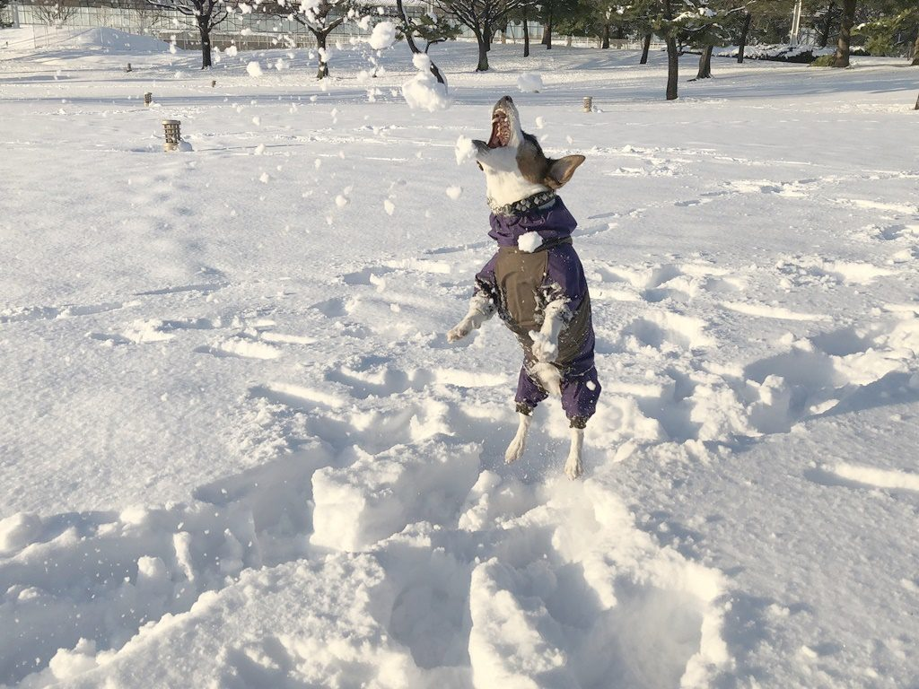 雪をパクリ