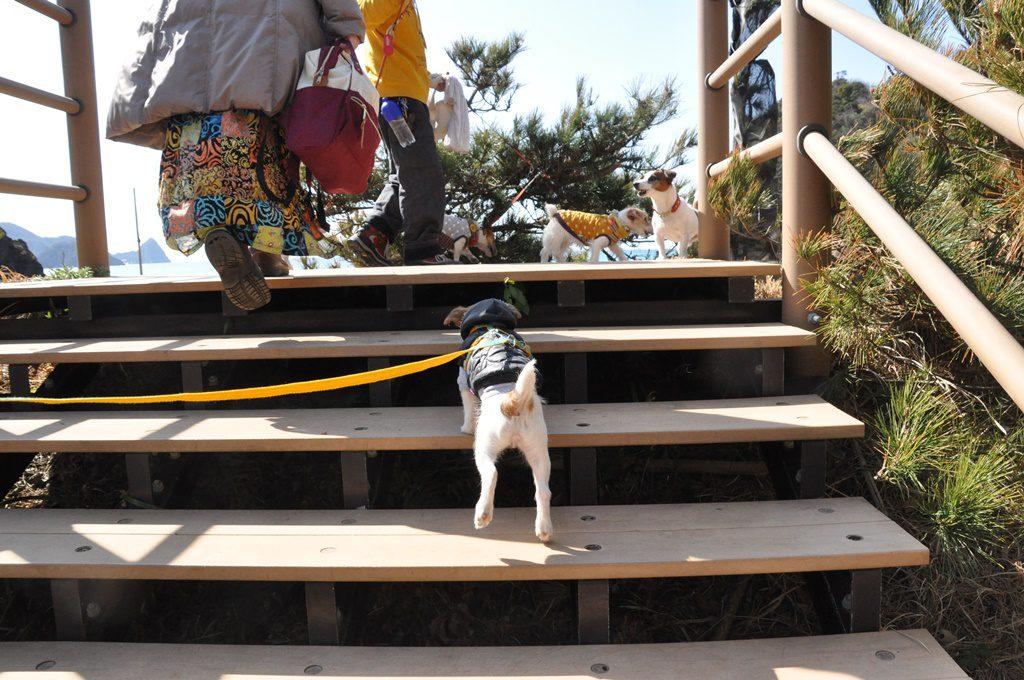 広場の直ぐ裏に登り口があります。初めての階段をヒンメルも上手に登れました。