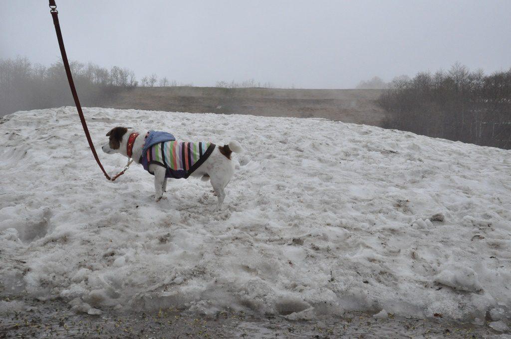 雪大好きですが、違和感を感じるソラです。