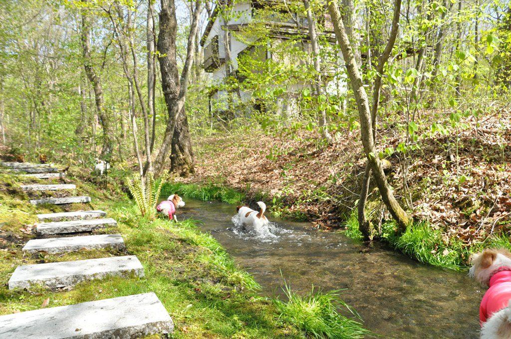 庭に流れている川で水遊び。