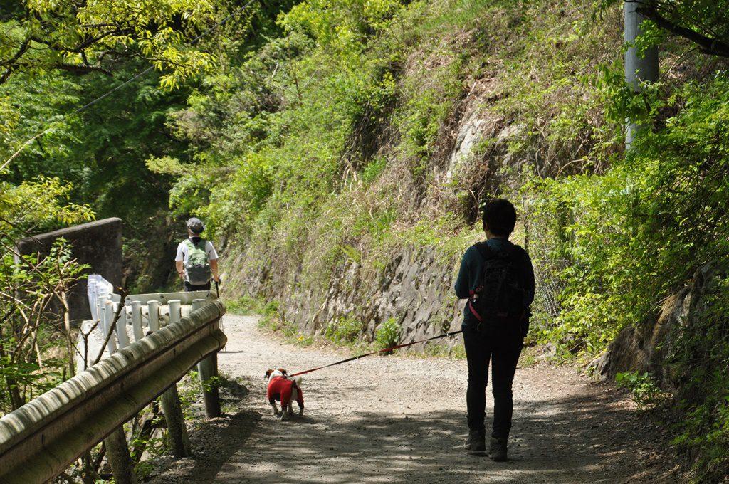 この道を通り、神社の脇を通り抜け