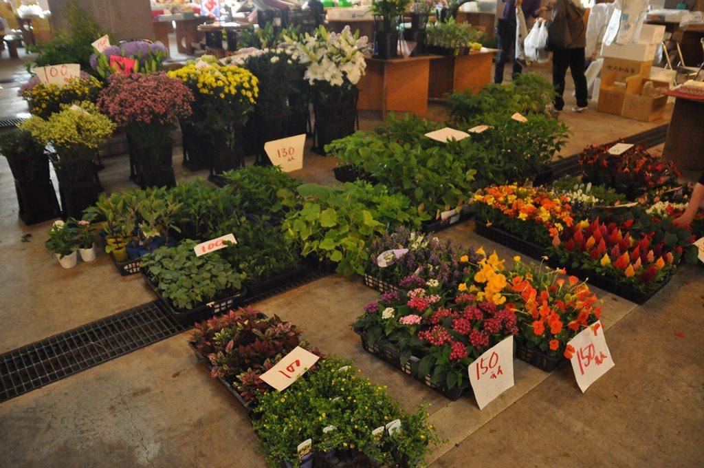 綺麗な花も販売しています。
