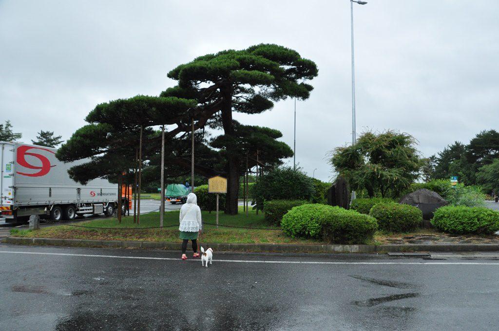 前沢SAで、雨の中ソラのトイレ散歩