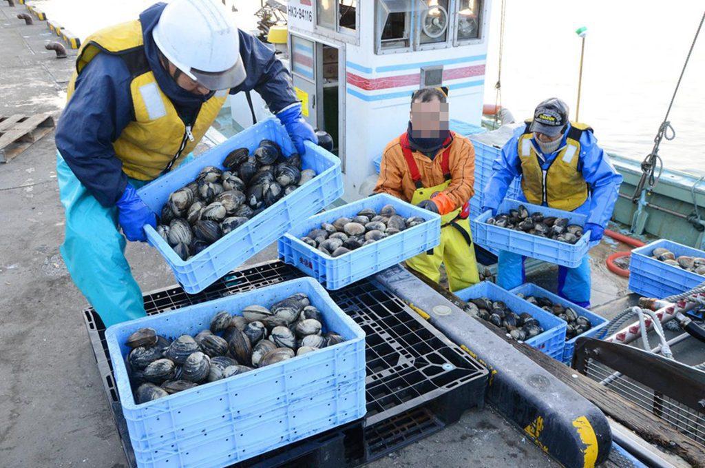 ホッキ貝水揚げ17年連続日本一の苫小牧。北海道ニュースリンクより飲用。