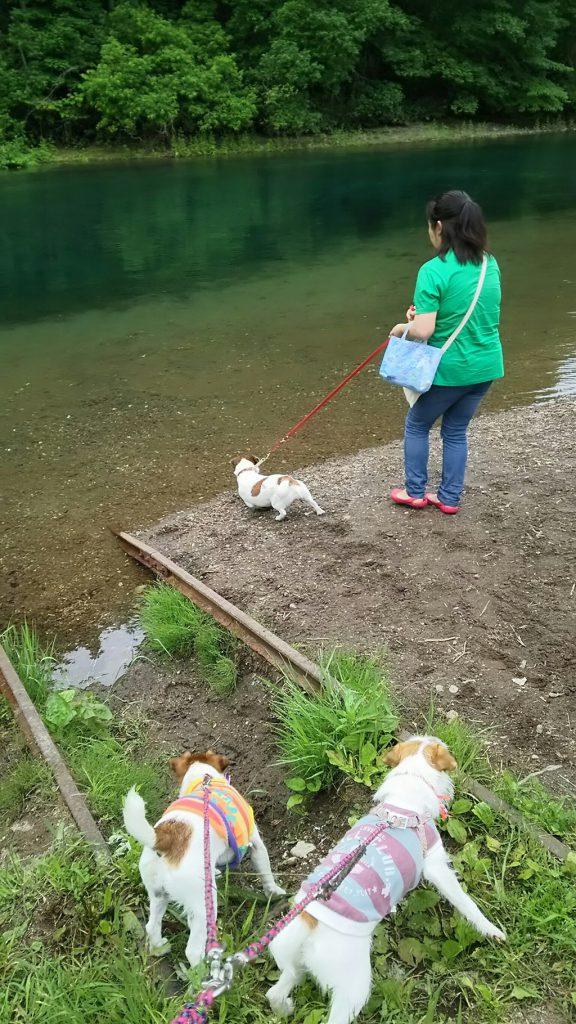 泳ぎたくてたまらないソラ。