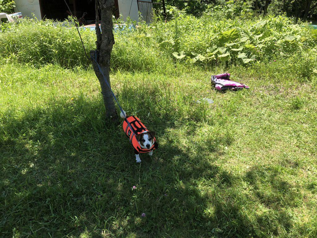 ソラは木陰で待機です。