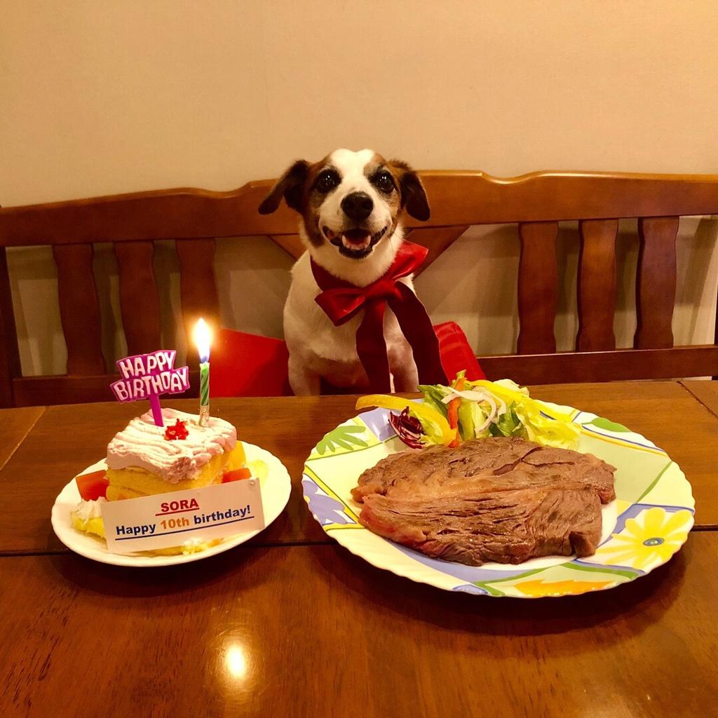 ソラ、10際の誕生日おめでとう。