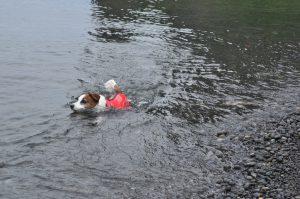 まだ、泳ぐよ。