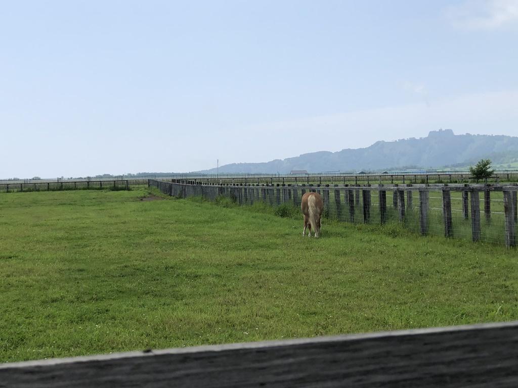 途中、道路横に牧場がありました。