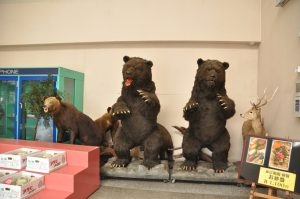 熊の剥製も鎮座。