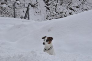 駐車場脇の雪にソラが埋もれています。