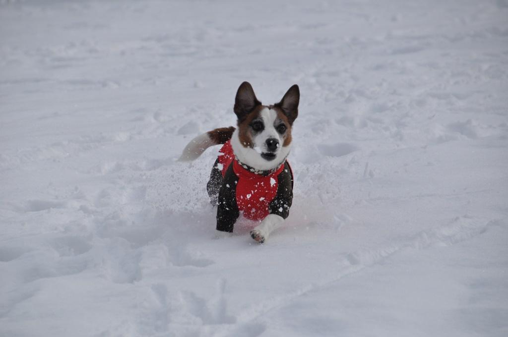 雪の上を走るのも楽しい~。