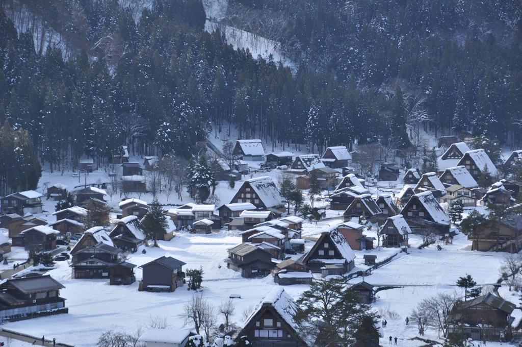 合掌造りの家は、雪風を避けるため、同じ方向を向いています。