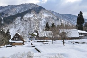 白川郷、菅沼より雪深いみたいです。